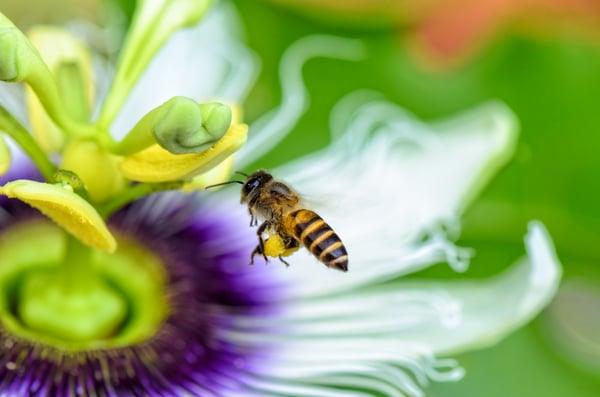 Bee flying over flower