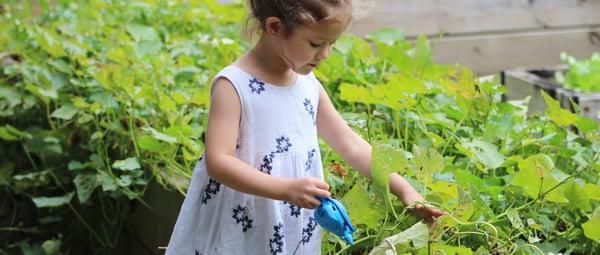 banner-nurture